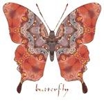Kismet Butterfly