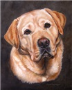 Yellow Labrador Retriever Painting