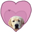 Yellow Lab Heart Dog