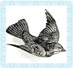 Vintage Bird Engraving