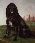Vintage Painting of Black English Setter
