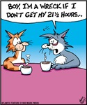 Cat Wreck No Sleep