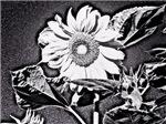 Night sunflower