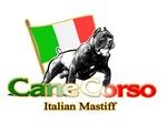 Cane Corso run