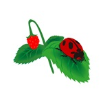 Ladybug and Strawberry