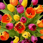 Red & Yellow Tulips