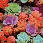 Colorful Succulents Garden