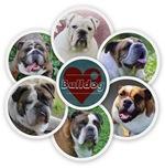bulldog circle collage