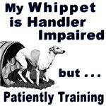 Whippet Agility