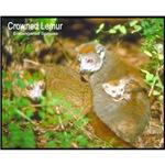 Crowned Lemur Photo