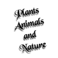 Plants, Animals and Nature