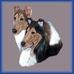 Smooth and Rough Collie