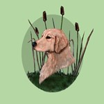 Golden Retriever & bullrushes