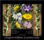 Endangered Wildflowers
