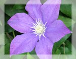 Nature/Flower Photography Gifts/Items