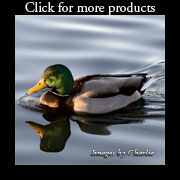 Duck Lover Gifts