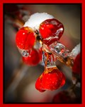 Viburnum Berries Covered with Ice Christmas Card
