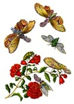 Maria Sibylla Merian Botanicals