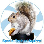 Special Trained Gray Squirrel