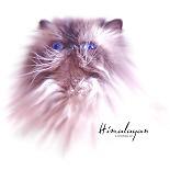 Himalayan Cat Watercolor Style