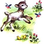 Cute Baby Lamb Sheep