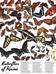 Butterflies of Maine Chart