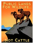Public Lands for Wildlife…Not Cattle
