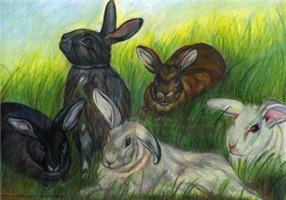 The Hayward Rabbits