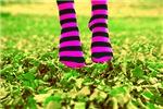 Happy Socks Cat Forsley Designs