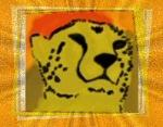 Cheetah of African Sun