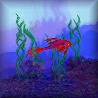 Siamese Fish Brilliant Violet Red