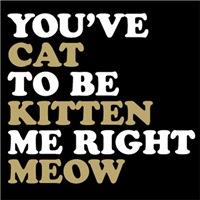 Cat Kitten Meow