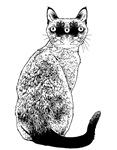 Kitty1 Chimera