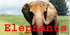 More Elephant Merchandise