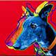 Amigo the Greyhound