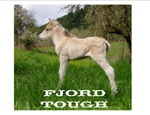 Fjord Horse Tough