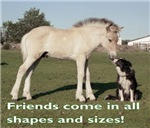 Fjord Horse Friends