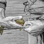 Trout Catch