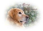 Merry Christmas Golden Retriever