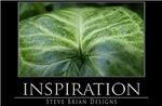 INSPIRATION31