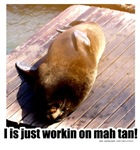 Tan Sea Lion