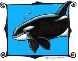 Orca Killer Whale Gifts
