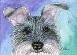 All ears Schnauzer dog