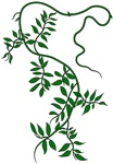 leafy green vine