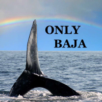 ONLY BAJA-RAINBOW