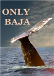 ONLY BAJA WILD SIDE WHALES