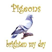 <b>PIGEONS BRIGHTEN MY DAY</b>