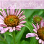 Perspective Echinacea Flowers