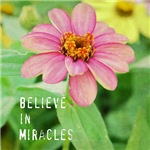 Believe in Miracles Zinnia