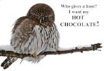 Hot Chocolate Owl